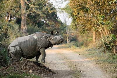The Rhino At Kaziranga Art Print by Fotosas Photography