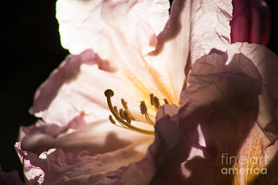 The Rhododendron Forest B Art Print by Jennifer Apffel