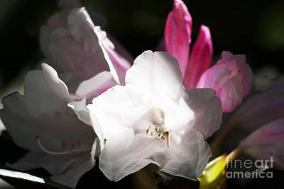 The Rhododendron Forest C Art Print by Jennifer Apffel