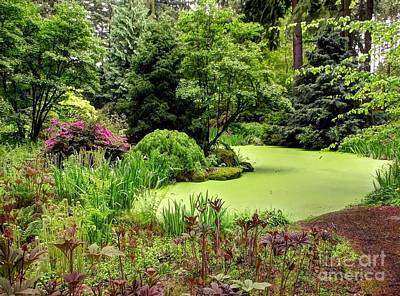 Photograph - The Rhododendron Species Foundation Fern Pond  by Chris Anderson
