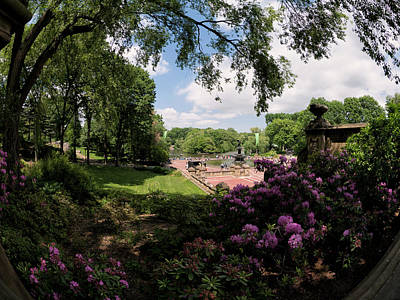 Photograph - The Rhododendrons Of Bethesda by Cornelis Verwaal