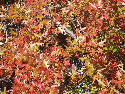 The Rich Reds And Yellows Of Fall Art Print by James Rishel