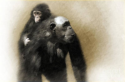 Chimpanzee Wall Art - Photograph - The Ride Home by Dan Holm