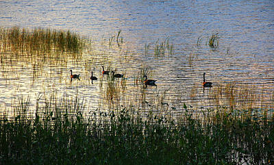 Photograph - The Right Light by Debbie Oppermann
