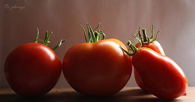 Tomato Photograph - The Ripening by Photography of MrjohnnyA