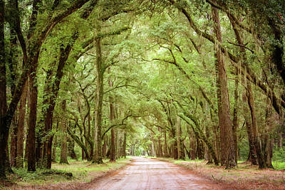 Edisto Island Photograph - The Road And The Trees by Daniela Duncan