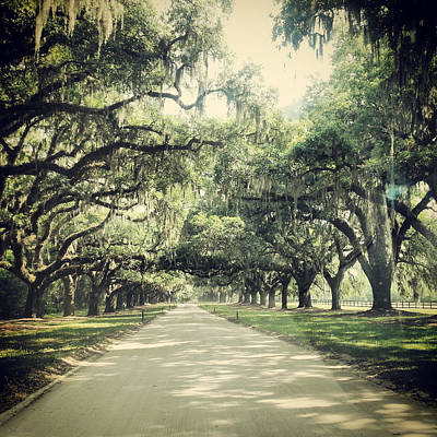 Photograph - The Road From Boone Hall by E Karl Braun