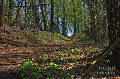 The Road In Spring Forest Art Print by