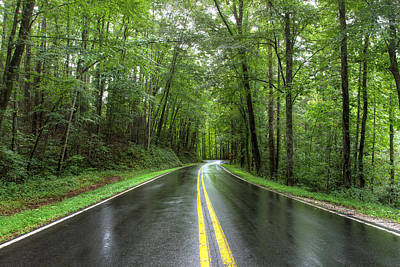 Photograph - The Road Into The Forest by Aaron Morgan