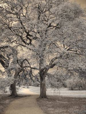 Mighty Oak Photograph - The Road Less Traveled by Jane Linders