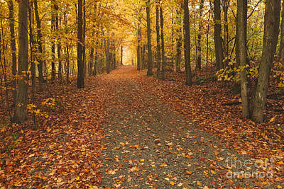 Fallen Leaves Photograph - The Road North by Charles Kozierok