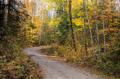Photograph - The Road Through The Woods. by Rob Huntley