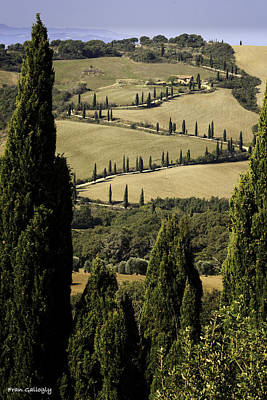 Photograph - The Road To La Foce by Fran Gallogly