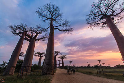 Photograph - The Road To Morondava by Alex Lapidus