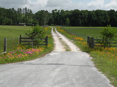 Becky Photograph - The Road To The House by Becky Erickson