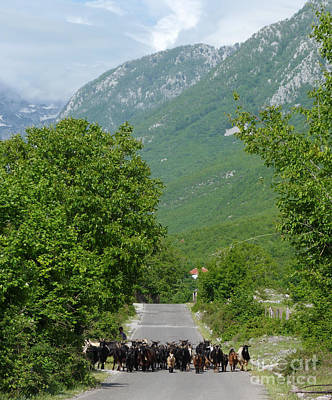 Photograph - The Road To Theth - Albania by Phil Banks