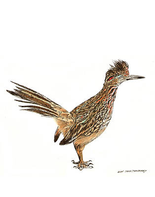 New Mexico Drawing - The Roadrunner State Bird Of New Mexico by Jack Pumphrey