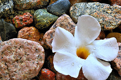 Photograph - The Rock Flower by Marwan Khoury