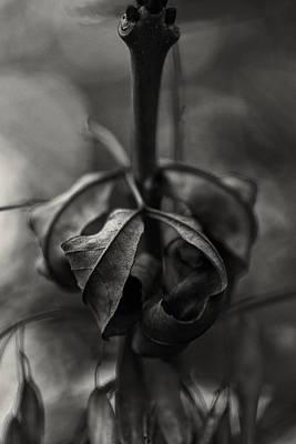 Photograph - The Rolled Leaf by Andreas Levi