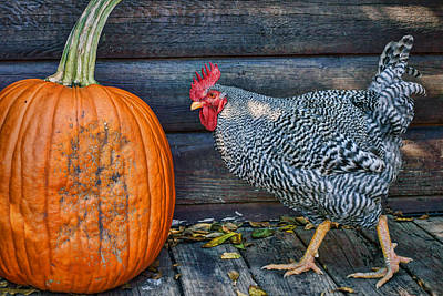 Photograph - The Rooster And The Pumpkin #1 by Nikolyn McDonald