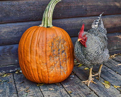 Photograph - The Rooster And The Pumpkin #2 by Nikolyn McDonald