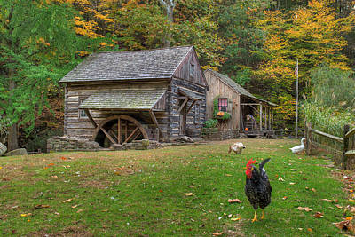 Barn In Woods Photograph - The Rooster Rules by William Jobes