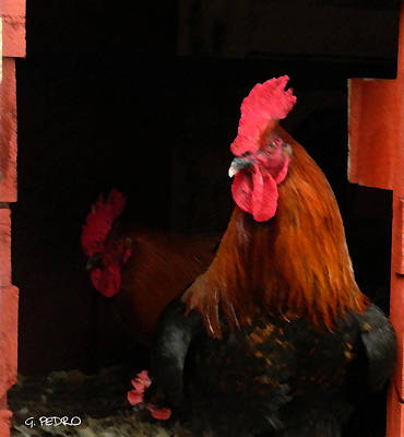 Pekin Bantam Painting - the Roosters by George Pedro