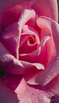 Photograph - The Rose 2 by David Lester