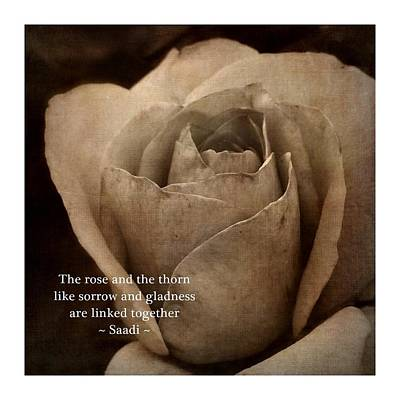 Photograph - The Rose And The Thorn by Patricia Strand