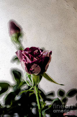 Photograph - The Rose Buds by Donna Brown