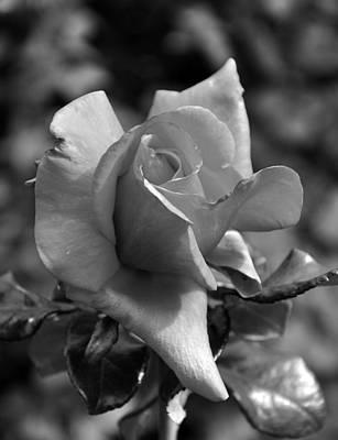 Photograph - The Rose In Black And White by Kirt Tisdale