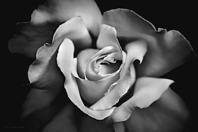 Photograph - The Rose In Shades Of Gray by Jennie Marie Schell