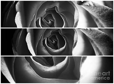 Photograph - The Rose Panels by John Rizzuto