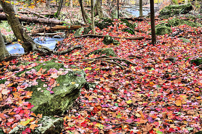 Photograph - The Rose Petal Path by JC Findley