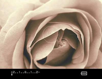 Photograph - The Rose by YoursByShores Isabella Shores