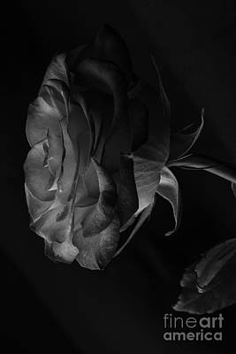 Photograph - The Rose Side by David Haskett