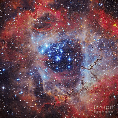 Photograph - The Rosette Nebula by Roberto Colombari