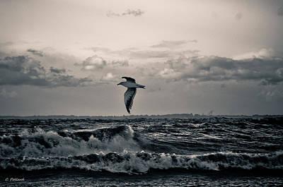 Beachglass Photograph - The Royal by Christy Pollard