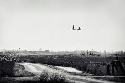 Goose Wall Art - Photograph - The Rustle Of The Wind by Piet Flour