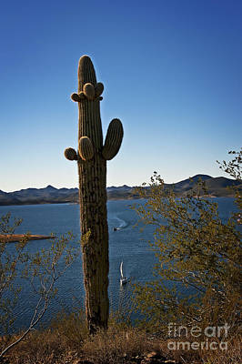 Photograph - The Saguaro And The Sailboat by Lee Craig