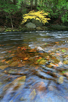Appleton Photograph - The Saint George River In Autumn by Chris Pinchbeck
