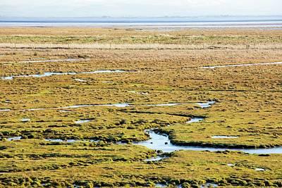 The Salt Marsh Or Merse At Caelaverock Art Print by Ashley Cooper