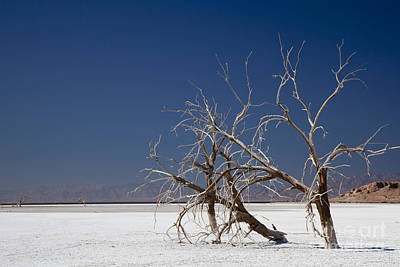 Target Threshold Nature - The Salton Sea by Jim West