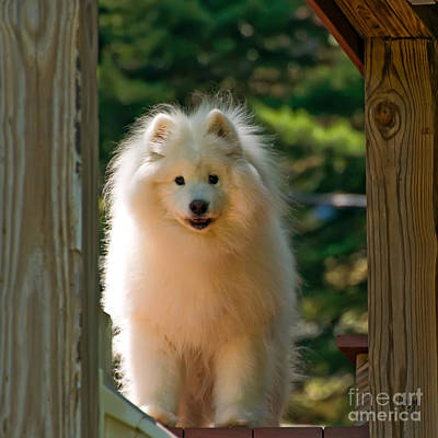 Photograph - The Samoyed Smile by Lois Bryan