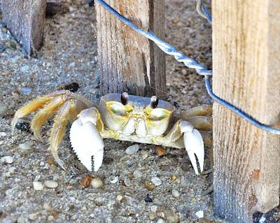 Photograph - The Sandcrab - Seeking Shelter by Kim Bemis