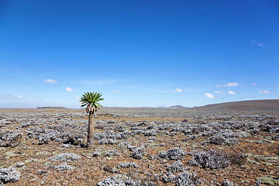 Afro Photograph - The Sanetti Plateau, Bale Mountains by Martin Zwick