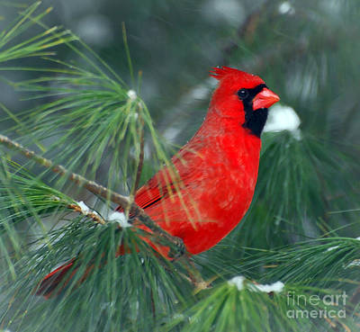 Photograph - The Santa Bird by Kerri Farley