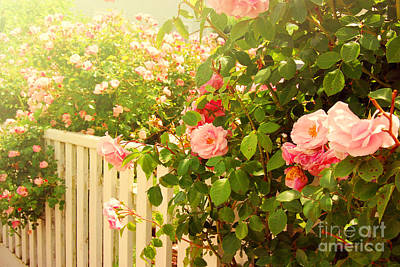The Scent Of Roses And A White Fence Art Print