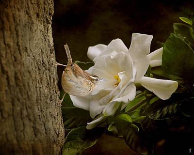 Gardenia Photograph - The Scent Of The Gardenia by Jai Johnson