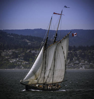 Photograph - The Schooner Pacific Grace by Dutch Ducharme